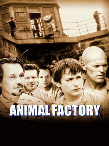 Cine974, Animal Factory