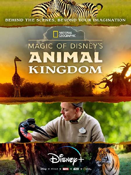 Cine974, Au cœur de Disney's Animal Kingdom