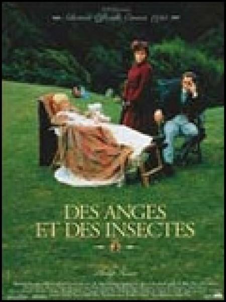 Cine974, Des anges et des insectes