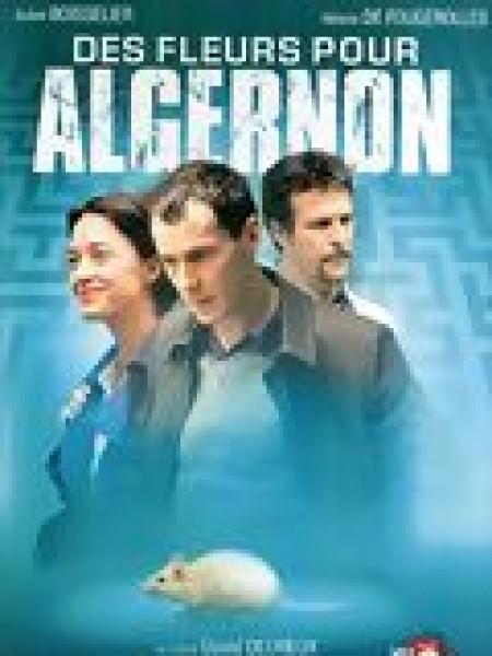 Cine974, Des fleurs pour Algernon