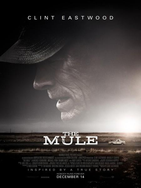 Cine974, La Mule