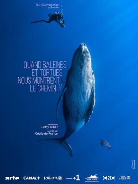 Cine974, Quand baleines et tortues nous montrent le chemin